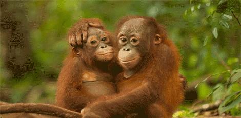 Daftar Hewan Langka Indonesia Yang Dilindungi Bagian 1 Maslatip Com